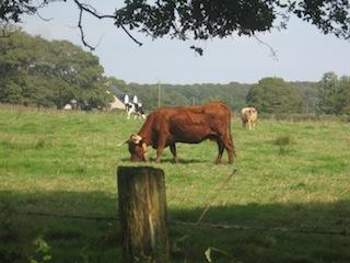 Commerce d'animaux vivants sur le Grand Ouest (44 Loire-Atlantique, 49 Maine-et-Loire, 35 Ille-et-Vilaine, 56 Morbihan, 72 Sarthe, 85 Vendée)